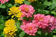 The Best Plants for the East Side of the House | eHow