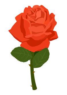 Rose, rajz, előfizetői