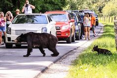 Explore Cades Cove, Great Smoky Mountains National Park, Tennessee - Bucket List Dream from #TripBucket #bearcrossing
