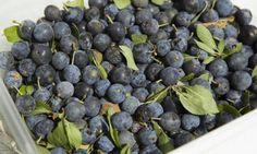 La susina tipica del Piemonte sud occidentale può sostituire la funzione del lassativo: è un frutto molto rinfrescante e ricco d'acqua e contiene