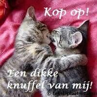 Dikke knuffel Friends Family, Hug, Cats, Funny, Animals, Geluk, Lyrics, Instagram, Funny Animals