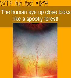 The human eye up close