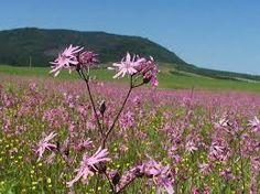 slovensko príroda - Hľadať Googlom Plants, Planters, Plant
