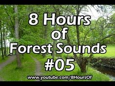 8 hours of sleep sounds - relaxing forest sounds - Meditation, yoga, tinnitus, sleep music 7 Chakras Meditation, Kundalini Yoga, Guided Meditation, Meditation Quotes, Jungle Sounds, Forest Sounds, Ayurveda, Music Heals, Massage