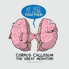 Corpus callosum humour