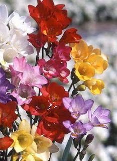 O Mundo Das Flores: Maio 2009