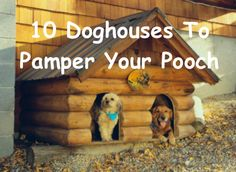 Living in Luxury: 10 Doghouses To Pamper Your Pooch – Project Pawsitivity Dog Mansion, Cool Dog Houses, Warm Bed, Dog Rooms, Custom Paint Jobs, Outdoor Dog, Dog Crate, Dog Friends, Small Dogs