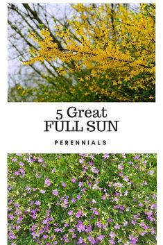 Flower Gardening For Beginners 5 Great FULL SUN Perennial Shrubs to try out in your landscape. These all grow well in southern Alabama - List of perennial shrubs that grow well in full sun Flowering Bushes Full Sun, Perennial Bushes, Full Sun Shrubs, Full Sun Perennials, Full Sun Plants, Best Perennials, Garden Shrubs, Sun Loving Plants, Blooming Plants