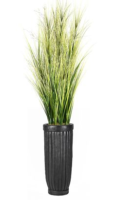 Laura Ashley VHX114218 Onion Grass with Twigs Planter, 81' ** See this great product.