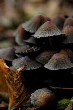 »✿❤CRS❤✿« Mushrooms •(❣)•Cℋ⚬c⚬ℓατє вя⚬ฬηѕ•(❣)•