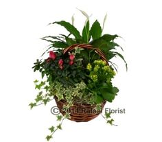 Our Flower Selections - Rafael Florist offers fresh flower delivery in Marin County. Save money by sending flowers directly with a Local Florist. Fresh Flower Delivery, Local Florist, Fresh Flowers, Basket, Garden, Plants, Garten, Lawn And Garden, Gardens
