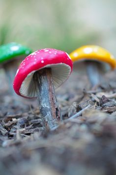 DIY Tutorial : Magical Clay Toadstools | Fairy Gardens