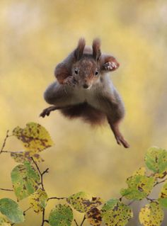 This leaping squirrel captured mid jump. | These Award Winning Photos Of Wild Animals Are Hilarious