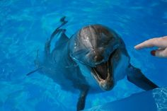 This is one of my favorite of all of our dolphin pictures. Why? That is me about to pet a dolphin! I was so excited.