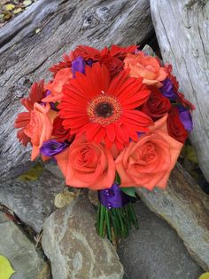 Per Patrick: Center flower color could serve as accent along with purple accents