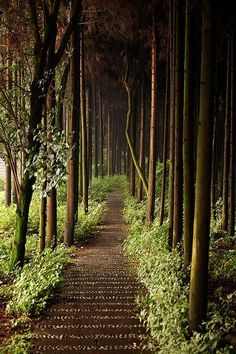 Forest Path, Chengdu, China ....