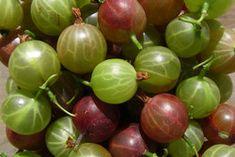 Ribes uva-crispa Most Nutritious Foods, Food Security, Forest Garden, Nutritional Value, Balanced Diet, Organic Gardening, Plants, Yard, Woodland Garden