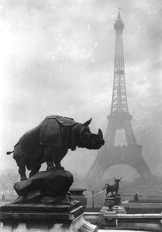 Paris.  Rhinoceros and Terrace of the Palais du Trocadero, vintage gelatin silver print, c. 1920s // Yvon