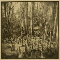 Van Dyke Brown print - Platinum-toned and tea-stained  http://othereye.wordpress.com/category/alternative-photography/