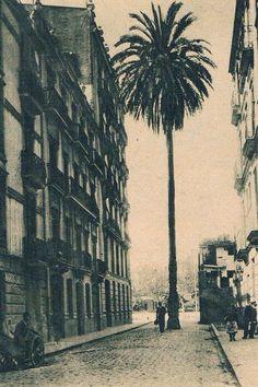 Calle de Julio Antonio con su famosa palmera, desparecida esta en el año 1994. Foto de los años 30 del archivo de Rafael Solaz. ... Alicante, Once Upon A Time, Spain, Black And White, Travel, World, Valencia Spain, Sevilla, Old Pictures
