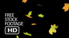 Free Stock Video Footage - Falling Green Leaf (Black Background) HD Background Images Hd, Black Backgrounds, Wallpaper Backgrounds, Wallpapers, Free Stock Footage, Free Stock Video, Colorful Wallpaper, Video Footage, Green Leaves
