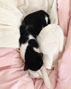 Bruce the cat. #catsofinstagram #catstagram #pinkbedding