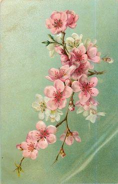 Soloillustratori: Cartoline fiorite