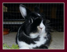 Congrats to Pockets on your new forever home #rabbits #bunnies #adoptdontshop #gainesville