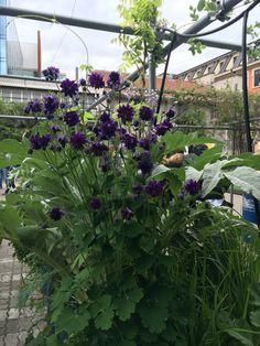 flower around