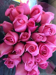 Its season of love boys and girls are going crazy trying to come up with something new to surprise their loved ones . On Happy Rose Day 2019 , lovers buy roses and present them to their lovers. Romantic Roses, Beautiful Roses, Beautiful Gardens, My Flower, Pretty Flowers, Pink Flowers, Order Flowers, Flowers Online, Rosa Rose