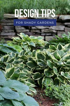 Garden designers know that shady gardens have some unique challenges as well as some creative advantages. Here are seven tips that can help you make the most of a shady site. Shade Garden, Yard Ideas, Gardening Tips, Beautiful Flowers, Landscaping, Designers, Challenges, Trees, Gardens