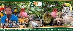 #PROYECTO365: 061 - EL CLUB DE LOS ANIMALITOS