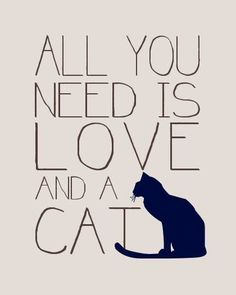 All you need is love and a cat <3  #cat #gatti #quote