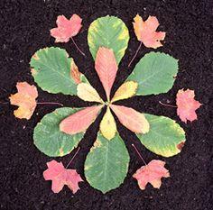 Land Art for Kids: How to make a natural leaf star