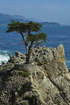 Memories of childhood, honeymoon and visiting with our kids.... Monterey, CA
