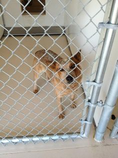 Heeler...what Kota looked looked like-in a cage...the first time we met
