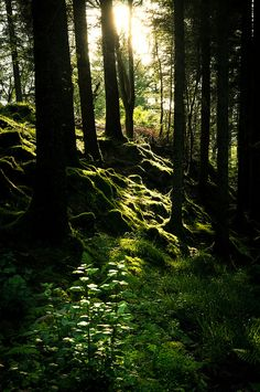 A pretty woodland in Norway, by xiaoran. Deep Forest, Forest Light, Magic Forest, Photos Voyages, Walk In The Woods, Beautiful Landscapes, Mother Nature, Enchanted, Woodland