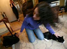 Jordana Serebrenik -  Professional Cat Catcher