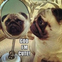 I chose this because pugs are ugly but cute ate the same time just like me.