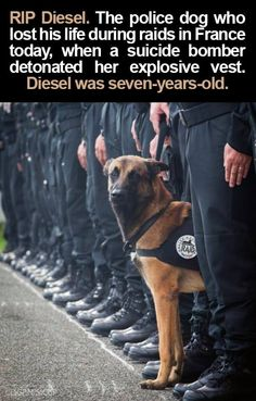 """Rest in Peace Buddy, ..Police dogs are often the unsung heroes in situations like these."" #PrayForFrance #November18th2015"