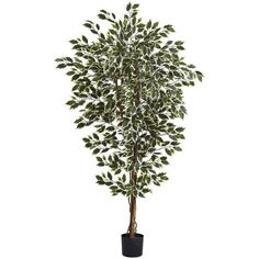 nearly natural 6-foot Hawaiian Ficus Tree, Green (1.330 NOK) ❤ liked on Polyvore featuring home, home decor, floral decor, plants, decor, flowers, flowers & plants, green, flower home decor and green planters