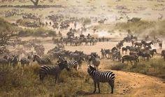 Amazing Serengeti