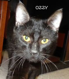 UPDATE-ADOPTED! AVAILABLE 6/20! STRAY Tag# 338 Name is Ozzy  Black  Male-not neutered   https://www.facebook.com/photo.php?fbid=655766914494131&set=a.655766414494181.1073742017.267166810020812&type=3&theater