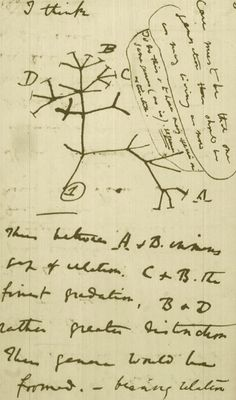 Darwin's enduring legacy: Charles Darwin's 1837 sketch of the diversification of species from a single stock.