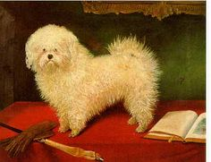 The Bichon Frisé in Art-Gallery 7 Page 1