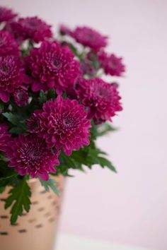 Chrysanthemum, Most Beautiful Flowers, Awesome, Creative, Plants, Gifts, Photography, Inspiration, Beauty