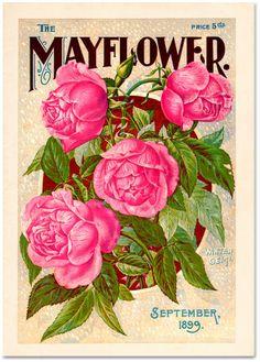 Letterology: Mayflower Power