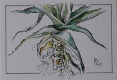 Aloe pen and wash.