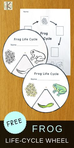 FREE Frog Life-Cycle-Wheel to help kids learn about life cycles plus 21 Life Cyc. FREE Frog Life-C Frogs Preschool, Kindergarten Science, Elementary Science, Frog Activities, Sequencing Activities, Frogs For Kids, Cycle For Kids, Life Cycle Craft, Lifecycle Of A Frog