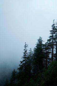 #fog #woods